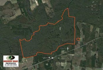 UNDER CONTRACT!  754 Acres of Hunting Land For Sale in Williamsburg County SC!