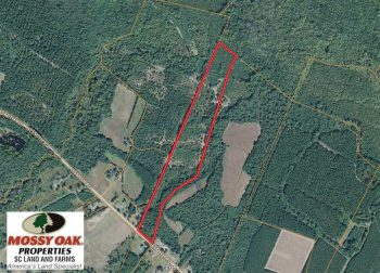 UNDER CONTRACT!  23 Acres of Hunting Land For Sale in Williamsburg County SC!