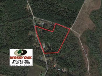 UNDER CONTRACT!  14.2 Acres Of Prime Hunting Land For Sale Clarendon County SC!