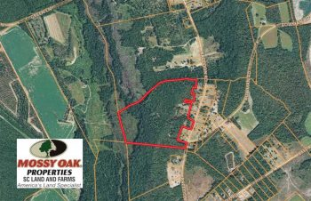 UNDER CONTRACT!  45 Acres of Hunting Land For Sale in Lee County SC!