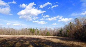 UNDER CONTRACT!  5.99 Acres of Hunting and Farm Land For Sale in Clarendon County SC!