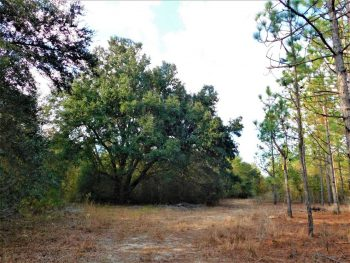 Great Hunting and Homesite on 54.10 acres located in Clarendon County!