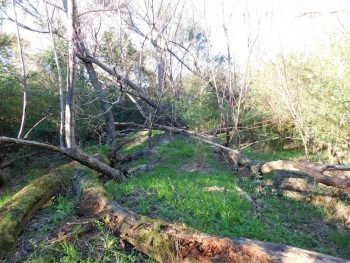 23.3 Hunting Acres with Homesite in Clarendon County, SC